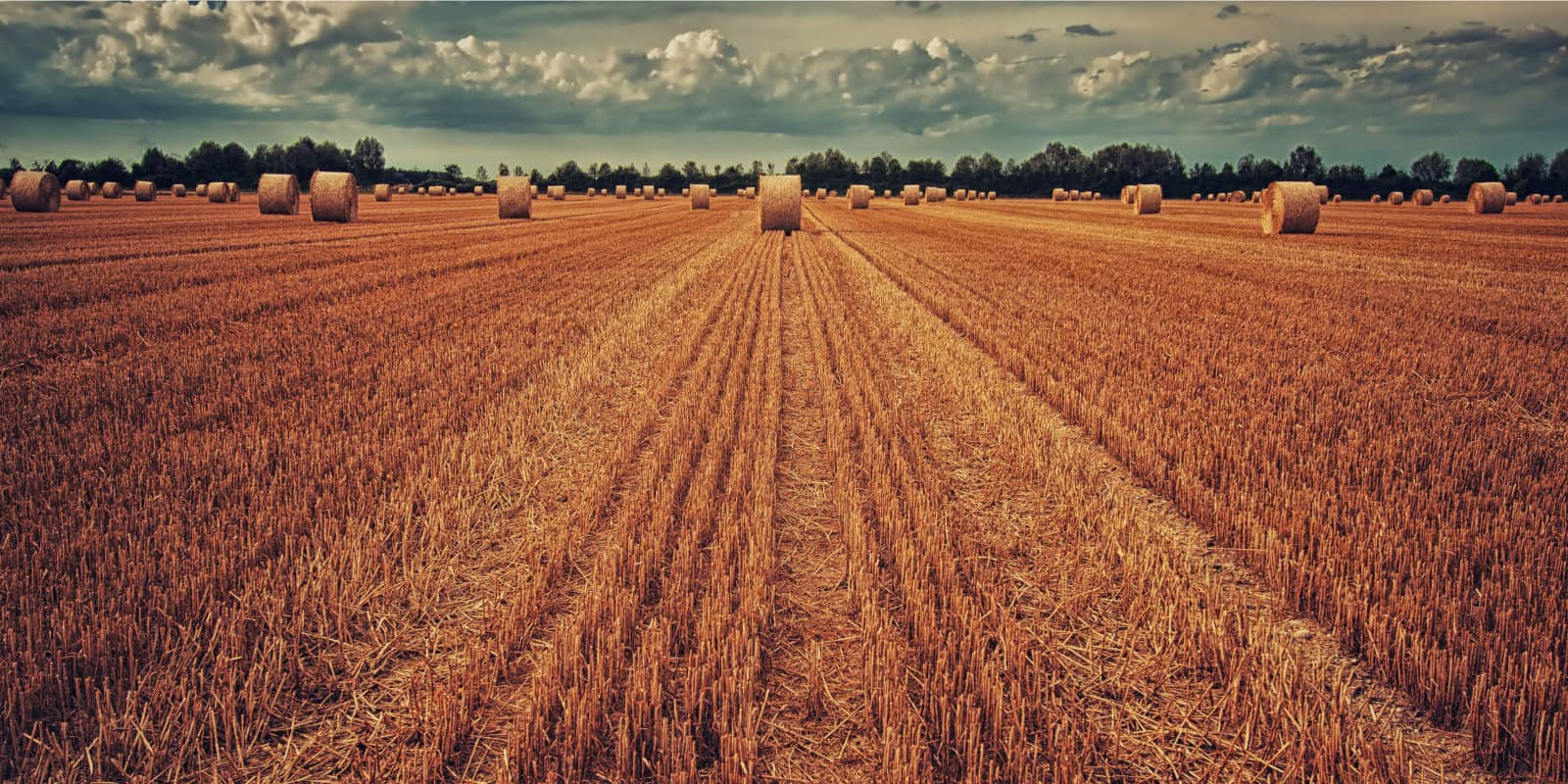 photo of a wheat field after harvest